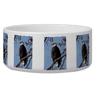 ABE Alaskan Bald Eagle Bowl