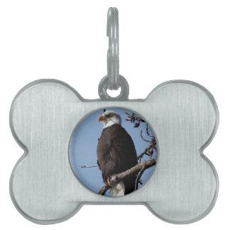 ABE Eagle calvo de Alaska Placas De Nombre De Mascota