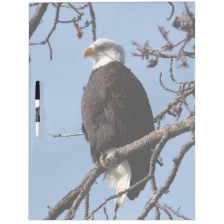 ABE Eagle calvo de Alaska Tablero Blanco