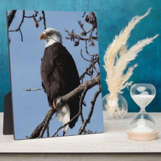 ABE Eagle calvo de Alaska Placas Con Foto