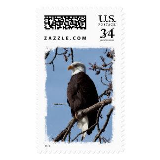 ABE Eagle calvo de Alaska Sellos
