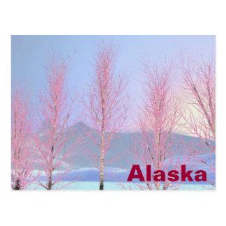 Abedul de la nata de la frambuesa tarjetas postales