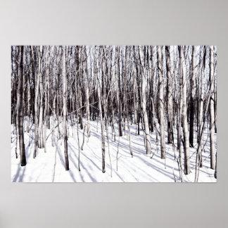 Abedul del invierno, naturaleza de las ramas del póster