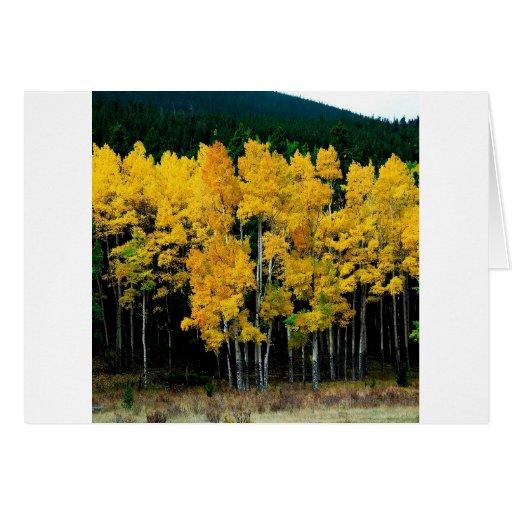 Abedul del otoño del árbol tarjetas