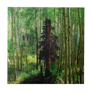 Abedul flaco del árbol azulejo cuadrado pequeño