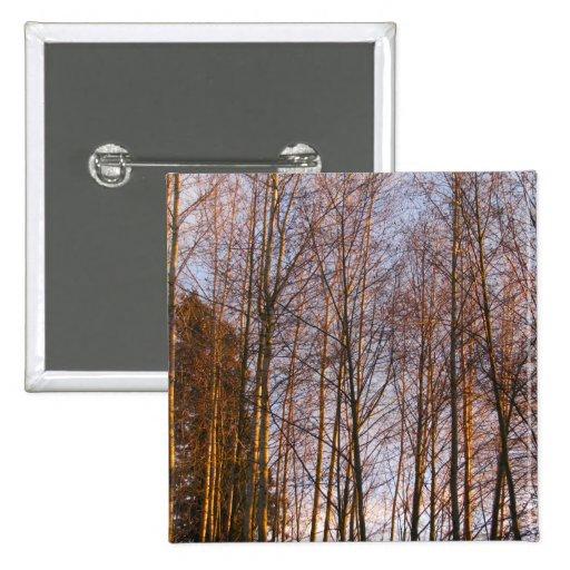 Abedules de oro pins