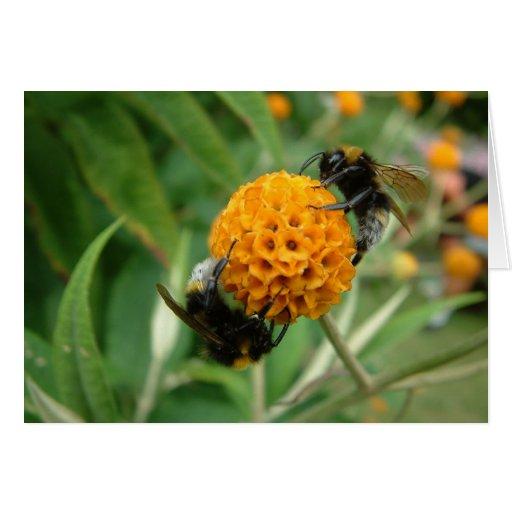 abeja 2 abeja o no 2 tarjeta de felicitación