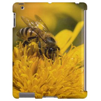 Abeja africana de la miel con la alimentación de funda para iPad
