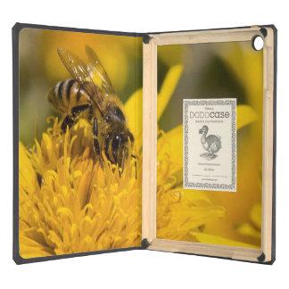 Abeja africana de la miel con la alimentación de