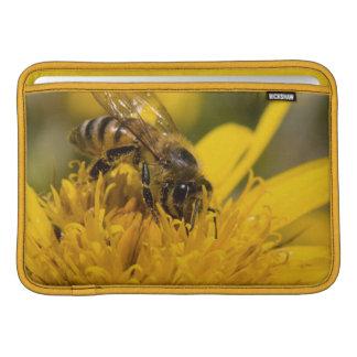 Abeja africana de la miel con la alimentación de fundas MacBook