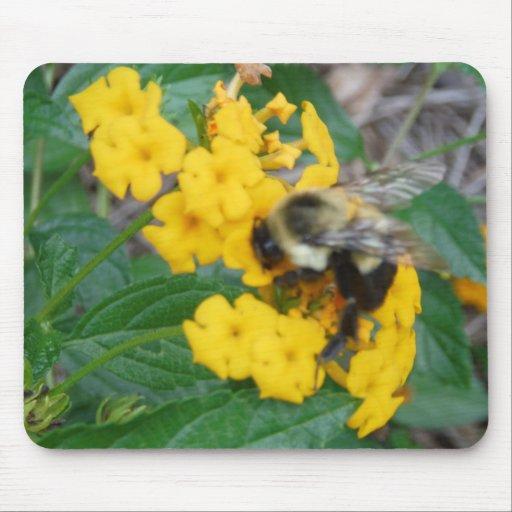 abeja amarilla y negra en la flor amarilla alfombrillas de ratones
