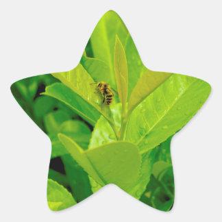 Abeja cariñosa verde pegatina en forma de estrella