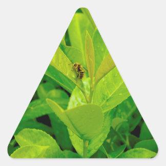 Abeja cariñosa verde pegatina triangular