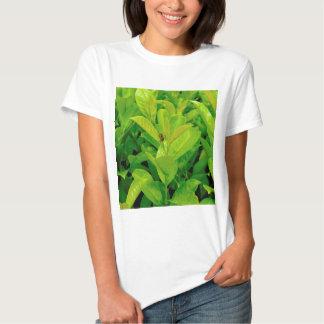 Abeja cariñosa verde poleras