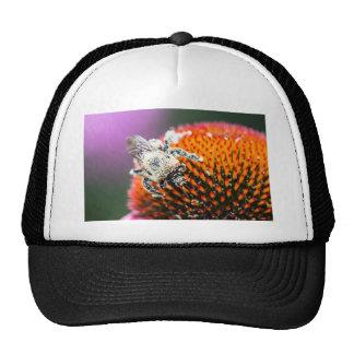 Abeja codiciosa gorra
