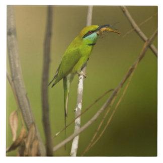 Abeja-comedor verde que come el insecto azulejo cuadrado grande