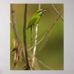 Abeja-comedor verde que come el insecto posters