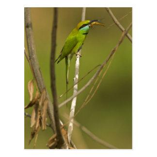 Abeja-comedor verde que come el insecto postal
