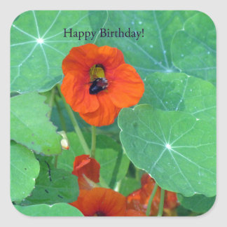 Abeja de la capuchina del feliz cumpleaños calcomanía cuadradas personalizadas