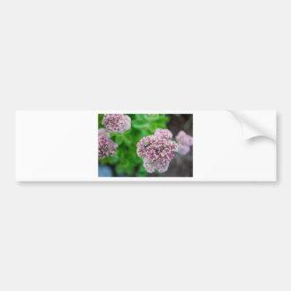 Abeja de la foto de la naturaleza en la flor rosad etiqueta de parachoque