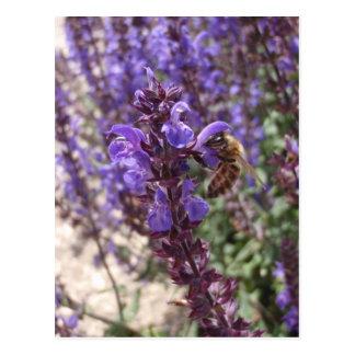 Abeja de la miel en el sabio del arbolado postal