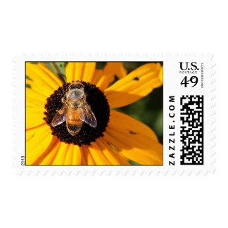 Abeja de la miel en el sello observado negro 2 de
