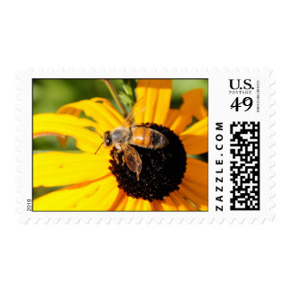 Abeja de la miel en el sello observado negro 3 de