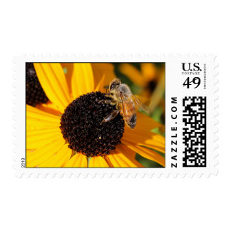 Abeja de la miel en el sello observado negro 4 de