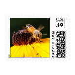 Abeja de la miel en el sello observado negro de