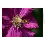 Abeja de la miel en la flor del Clematis Tarjeta De Felicitación
