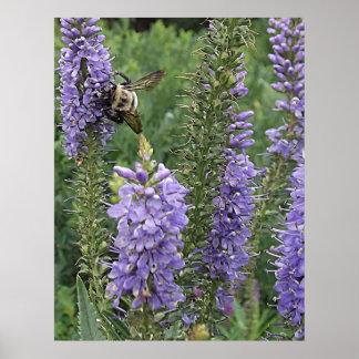 Abeja de la miel en la flor púrpura 2 poster
