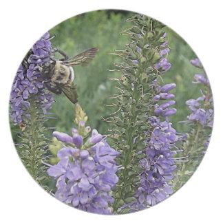 Abeja de la miel en la flor púrpura 2 platos de comidas
