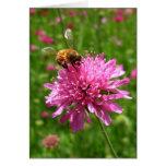 Abeja de la miel en la flor rosada felicitaciones
