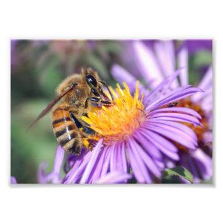 Abeja de la miel en la flor rosada púrpura cojinete