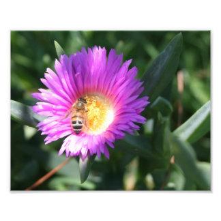 Abeja de la miel en la margarita rosada - impresió fotografías