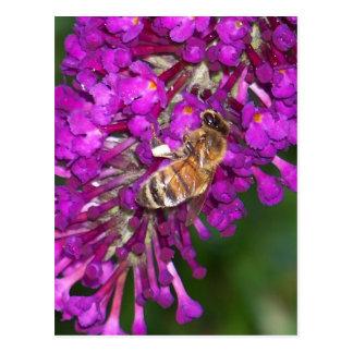 Abeja de la miel en la mariposa Bush Tarjetas Postales