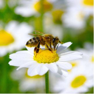 Abeja de la miel en margarita adorno fotoescultura