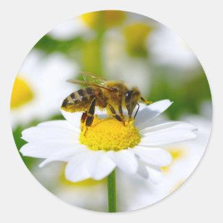 Abeja de la miel en margarita pegatina redonda