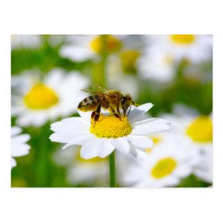 Abeja de la miel en margarita postal