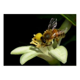 Abeja de la miel en tarjeta del ATC del flor del l Plantilla De Tarjeta De Negocio