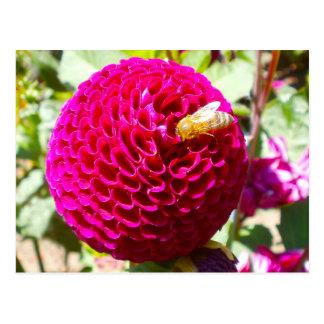 Abeja de la miel en una flor tarjetas postales