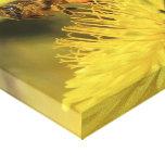 Abeja de la miel impresión en lienzo estirada