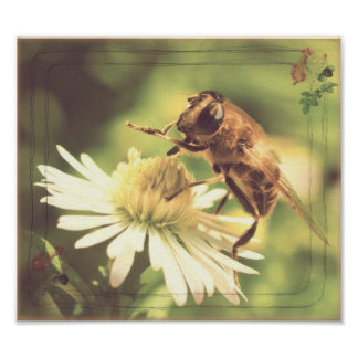 Abeja de la miel poster