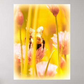 Abeja de la miel impresiones