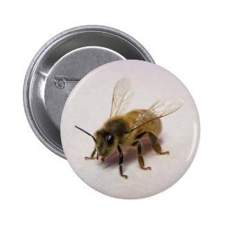 Abeja de la miel pin
