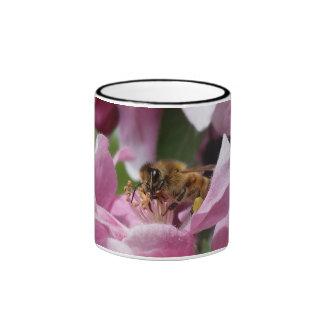 Abeja de la miel que poliniza el flor rosado del taza de dos colores