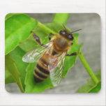 Abeja de la miel tapetes de raton