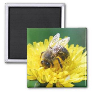 abeja de la primavera imán cuadrado