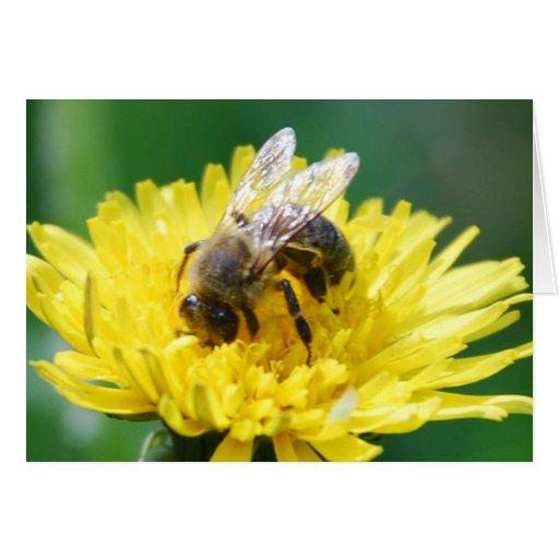 abeja de la primavera tarjeta de felicitación