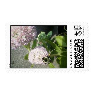 abeja del cardo del milkweed franqueo